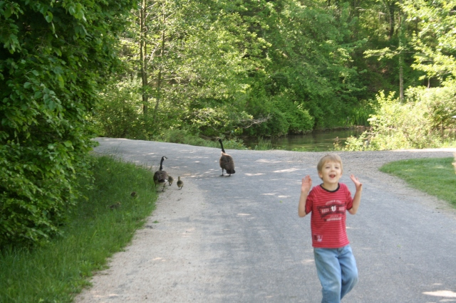 Gabriel and the geese.
