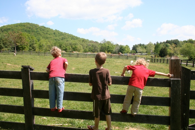 Visiting the sheep.